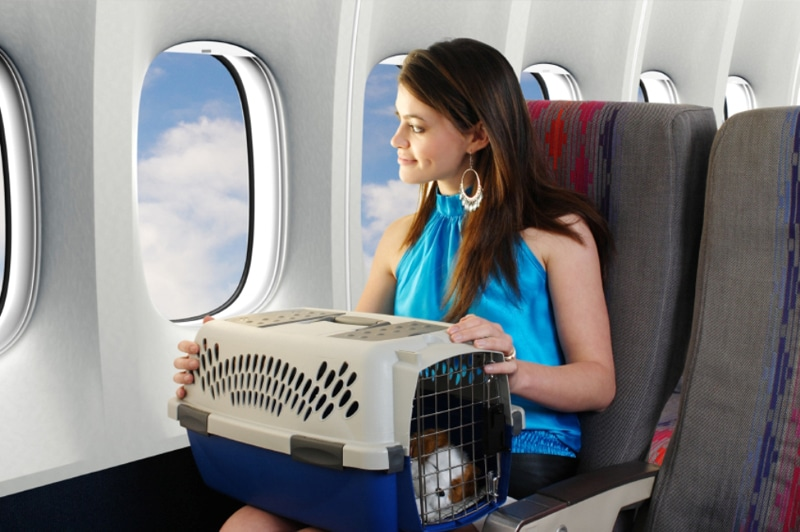сколько стоит билет в самолет на собаку