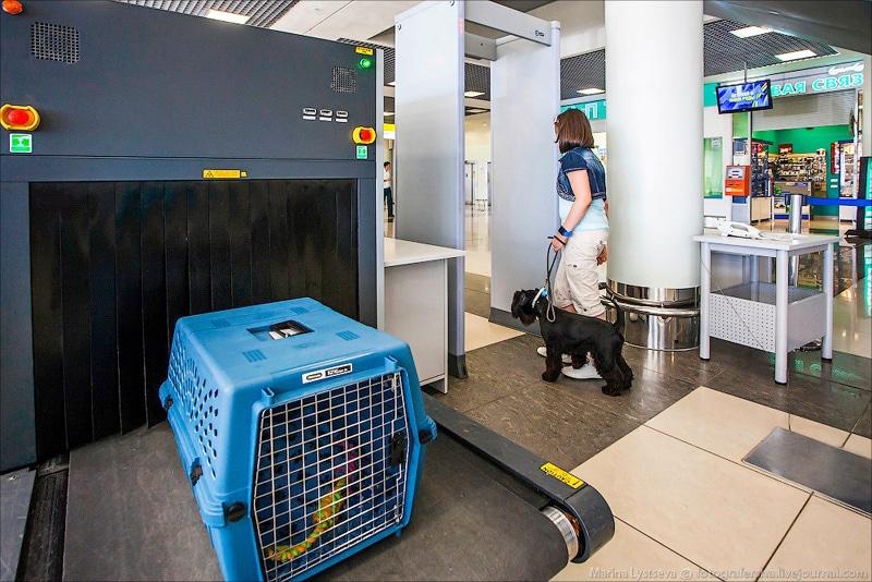 Сколько стоит билет для собаки на самолет