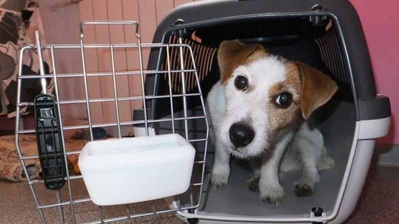 переноска для собак в самолет