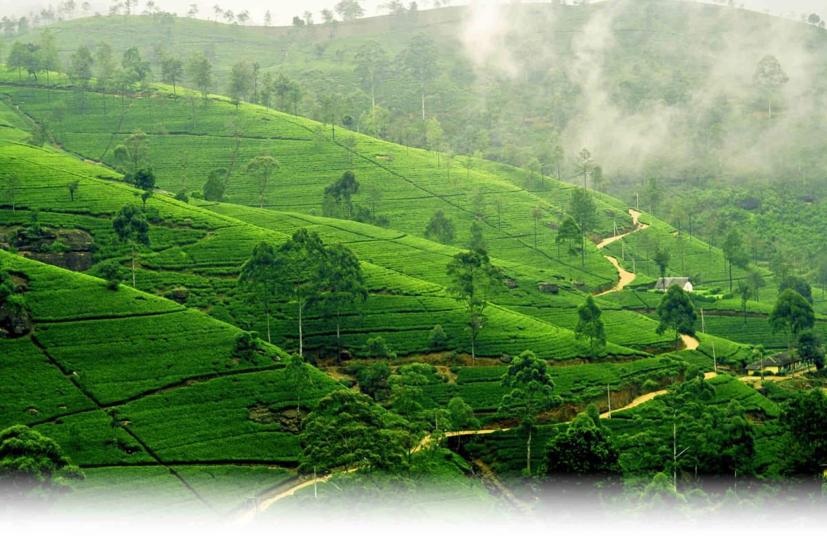 сколько лететь до Шри-Ланки из Уфы