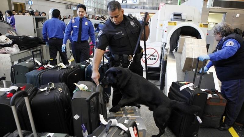 Как получить багаж в аэропорту