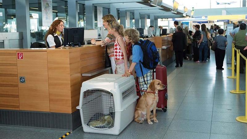 Что означает 1pc багажных места